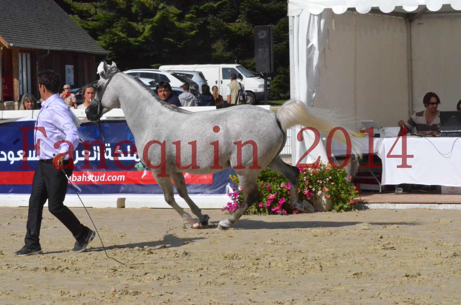 CHAMPIONNAT DE FRANCE  2014 A POMPADOUR - Sélection - SHEYK DE GARGASSAN - 12