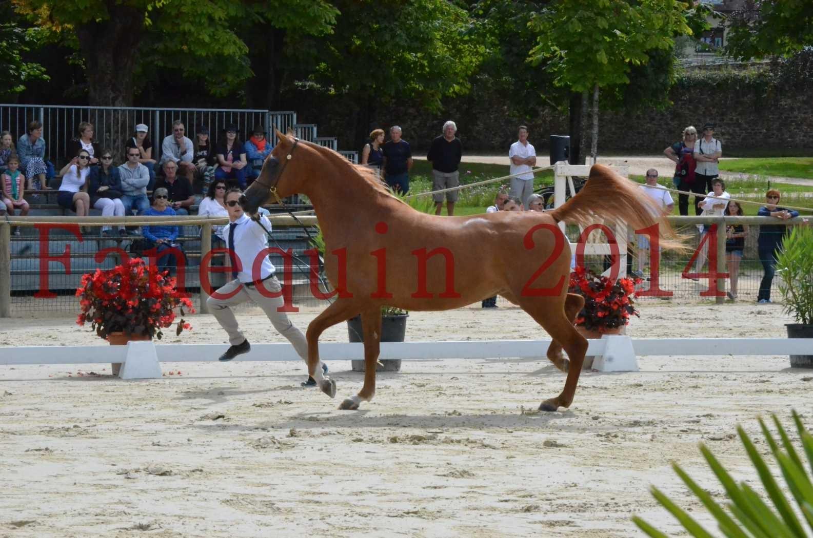 CHAMPIONNAT DE FRANCE 2014 A POMPADOUR - Championnat - LUTFINAH JA - 03
