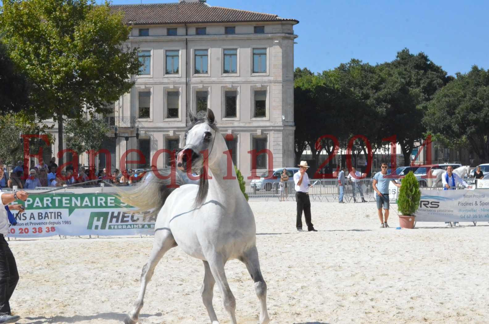 Concours National de Nîmes de chevaux ARABES 2014 - Sélection - SHAOLIN DE NEDJAIA - 57
