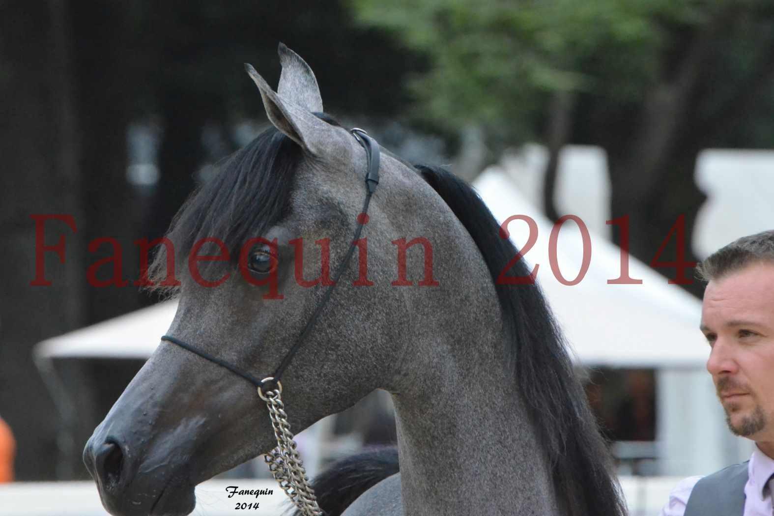 CHAMPIONNAT DE FRANCE 2014 A POMPADOUR - Notre Sélection - Portraits - AL MINYA - 6