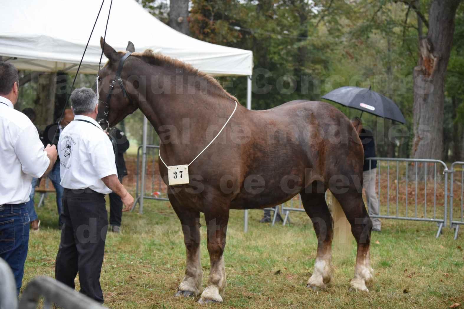 Concours Régional de chevaux de traits en 2017 - Trait BRETON - ELENNE DE TOU FOLL - 01