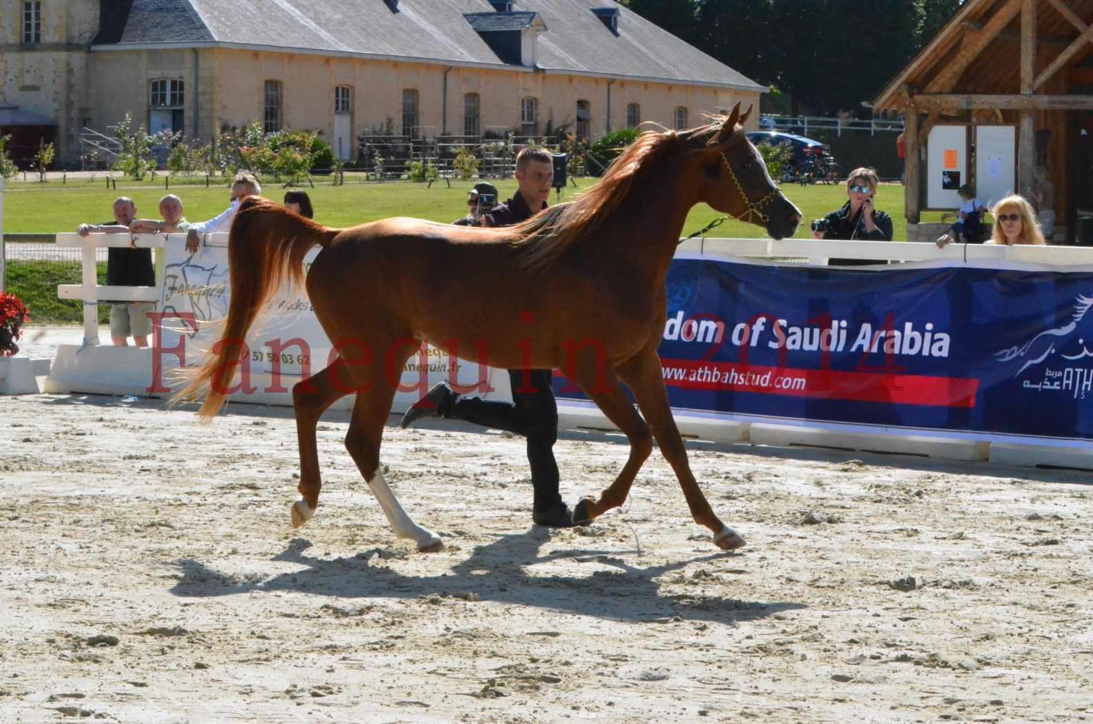 Championnat de FRANCE 2014 - Amateurs - SELECTO IBN SAMAWI - 009