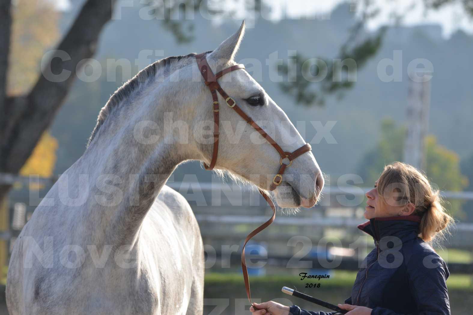 Confirmation de chevaux LUSITANIENS aux Haras d'UZES Novembre 2018 - LUTECE DU CASTEL - Portraits - 4