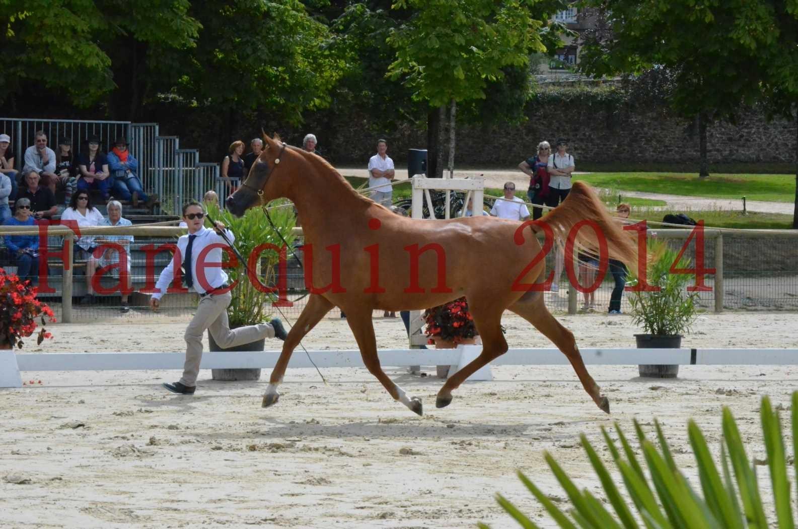 CHAMPIONNAT DE FRANCE 2014 A POMPADOUR - Championnat - LUTFINAH JA - 02