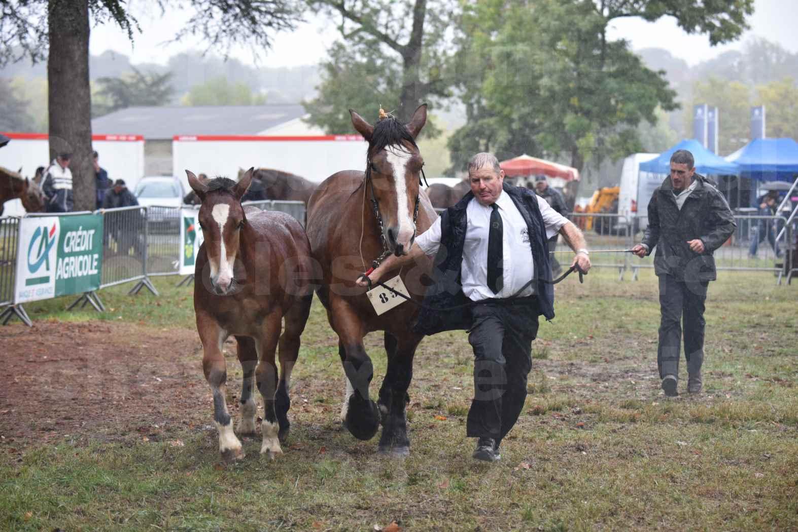 Concours Régional de chevaux de traits en 2017 - Jument Suitée - Trait BRETON - UNION 11 - 18