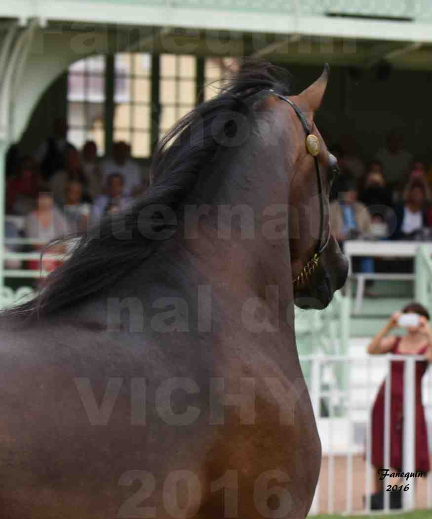 International Arabian Horse Show B de VICHY 2016 - MILLIAR - Notre Sélection - Portraits - 2