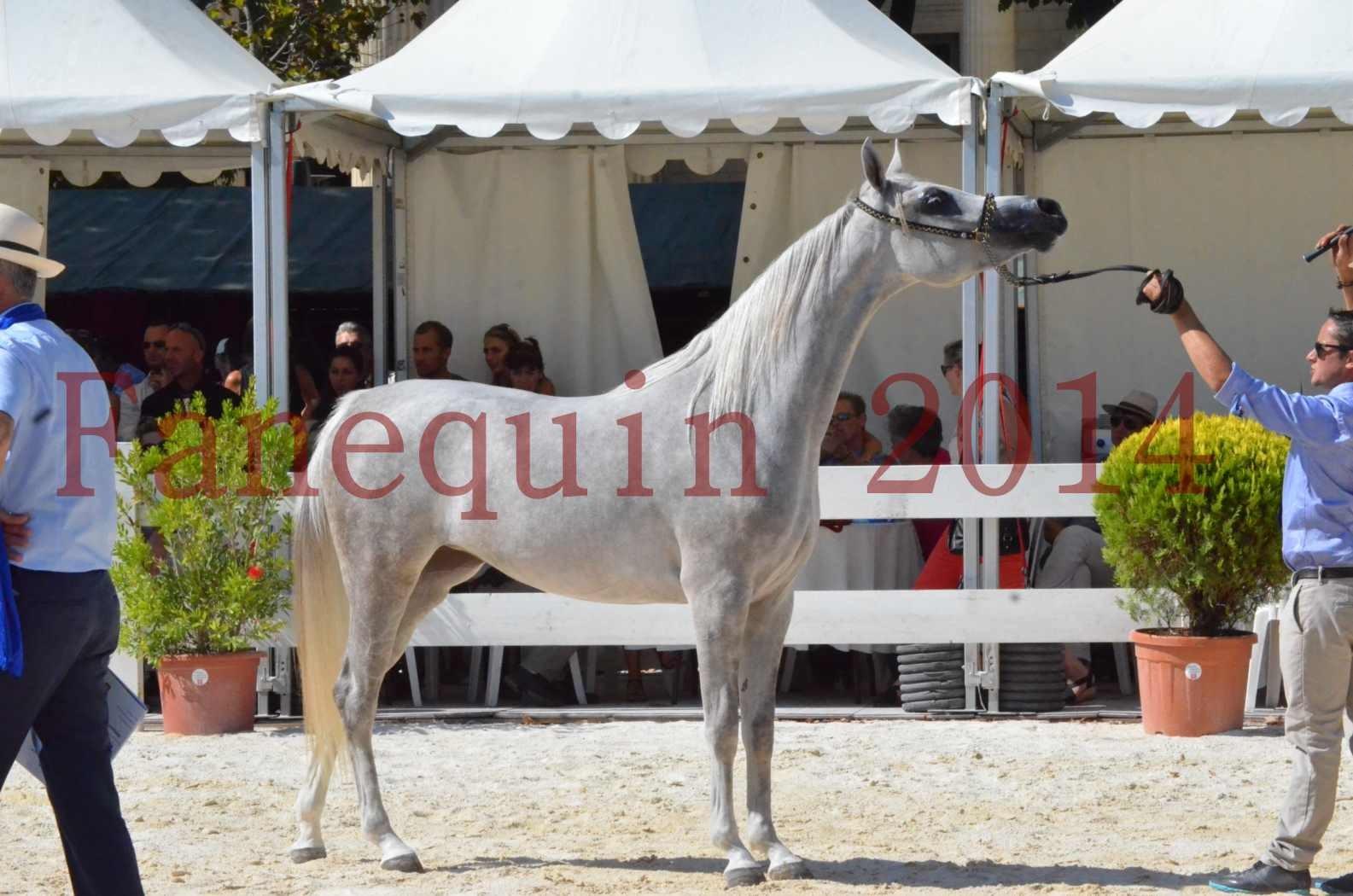 Concours national de Nîmes 2014 - Championnat Femelles Juniors - VOLODIA DE LAFON - 17