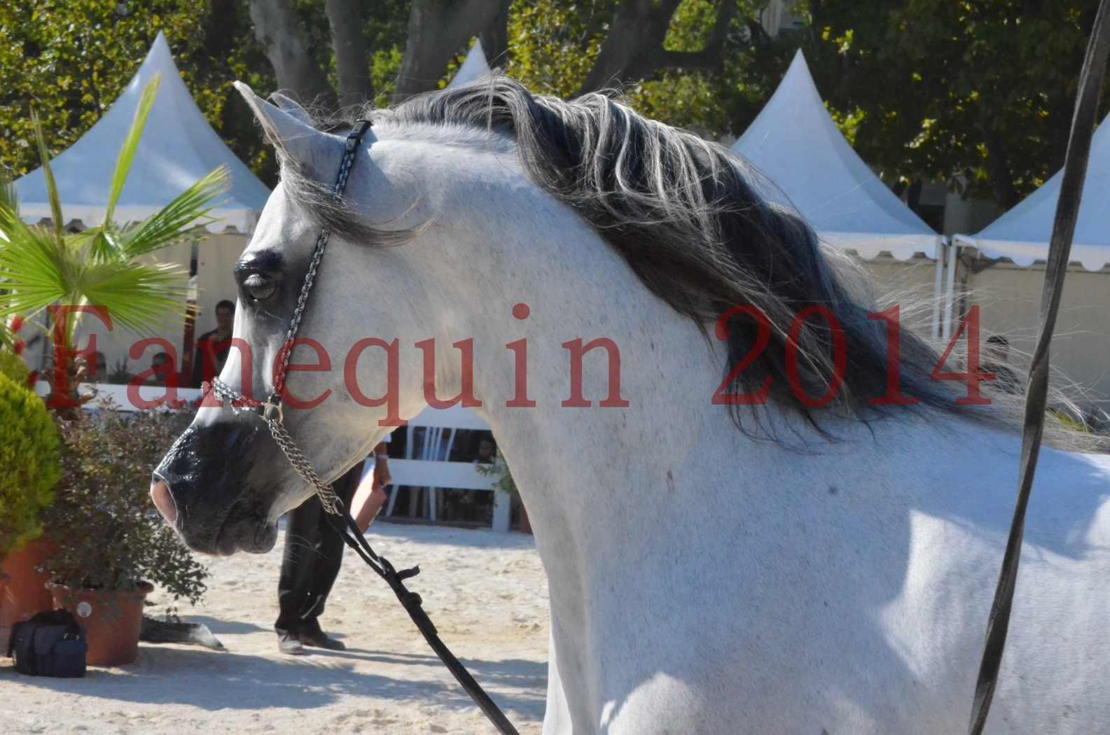 Concours National de Nîmes de chevaux ARABES 2014 - Championnat - SHAOLIN DE NEDJAIA - 24