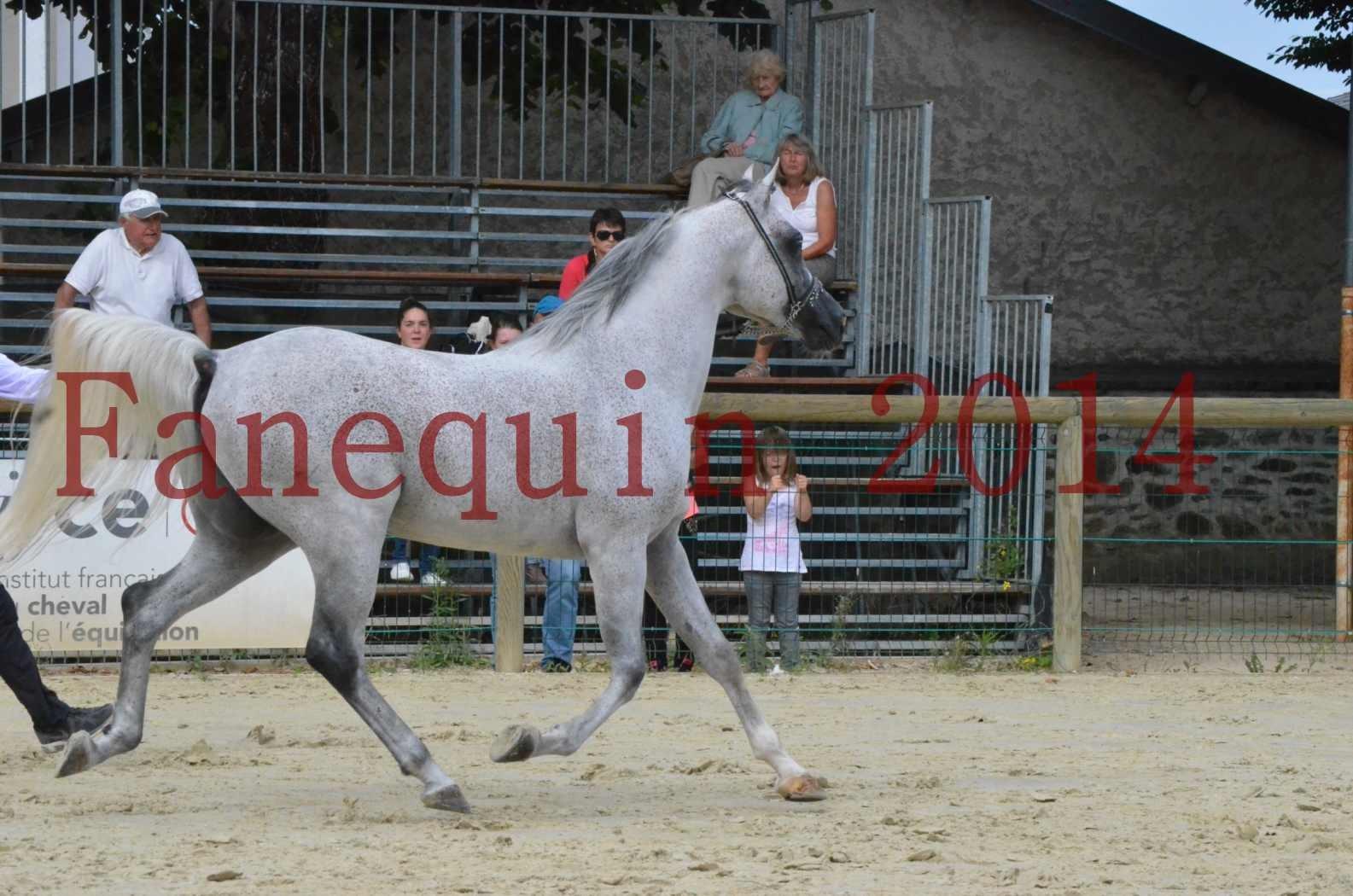 CHAMPIONNAT DE FRANCE  2014 A POMPADOUR - Championnat - SHEYK DE GARGASSAN - 15
