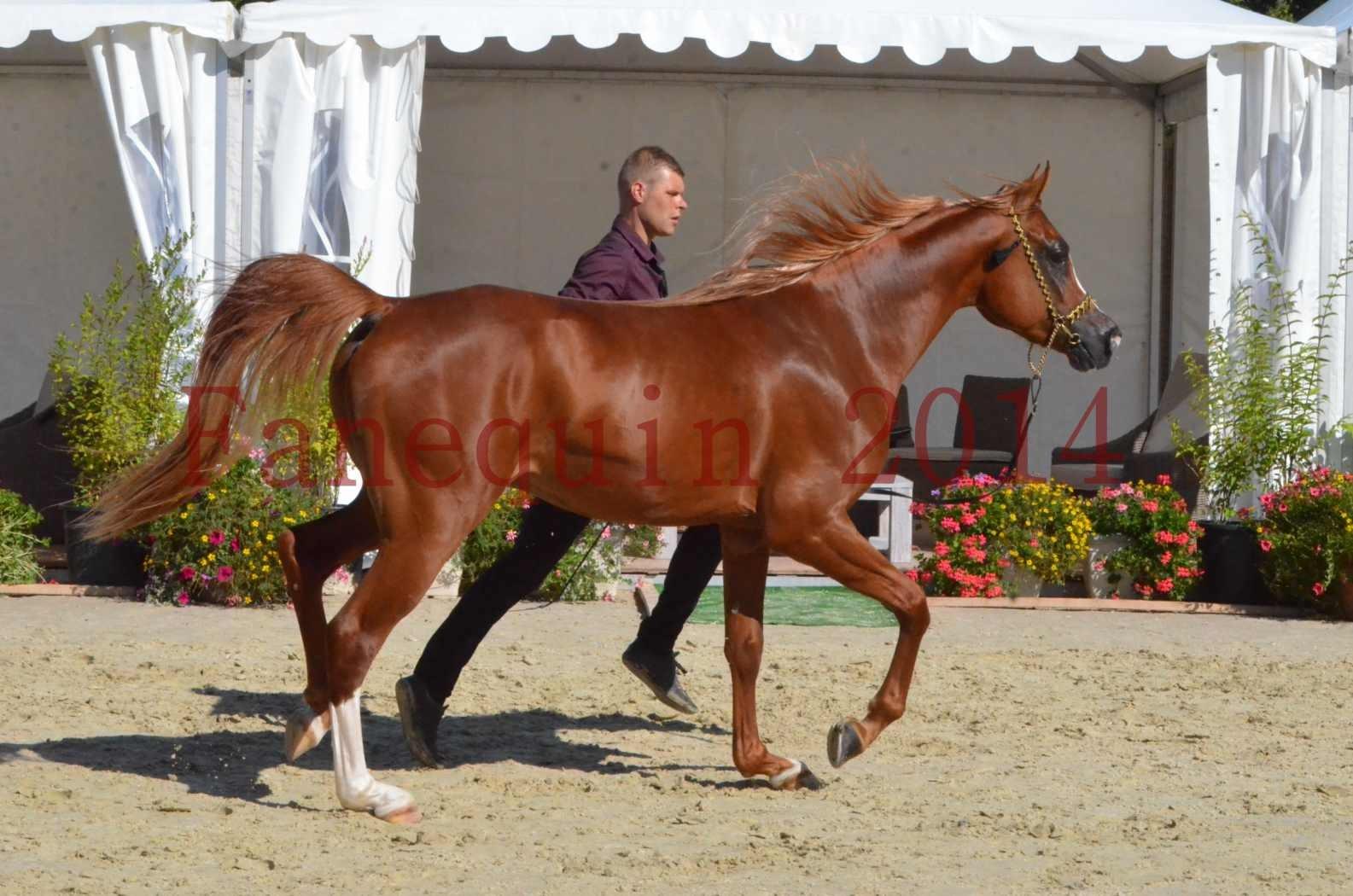 Championnat de FRANCE 2014 - Amateurs - SELECTO IBN SAMAWI - 045