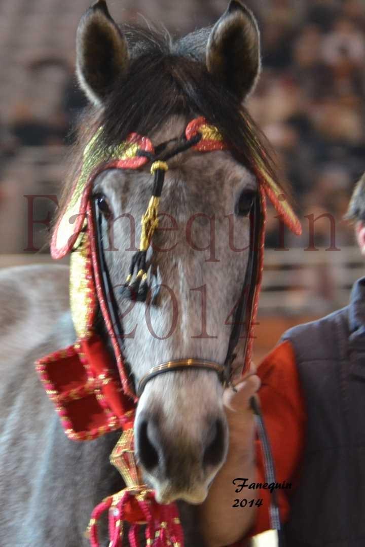 Show des races - Chevaux BARBE 38