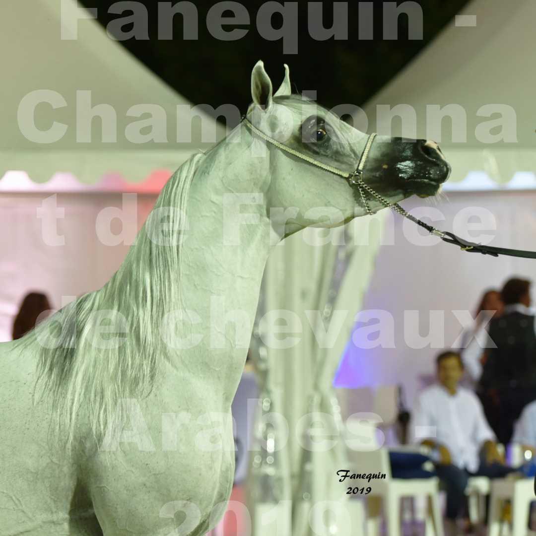 Championnat de France des chevaux Arabes en 2019 à VICHY - SHAMS EL ASHIRAF - Portraits - 3