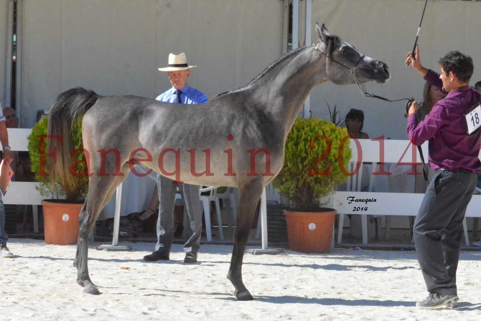 Concours National de Nîmes de chevaux ARABES 2014 - Notre Sélection - JOSEPH'S BOUZIOLS - 20