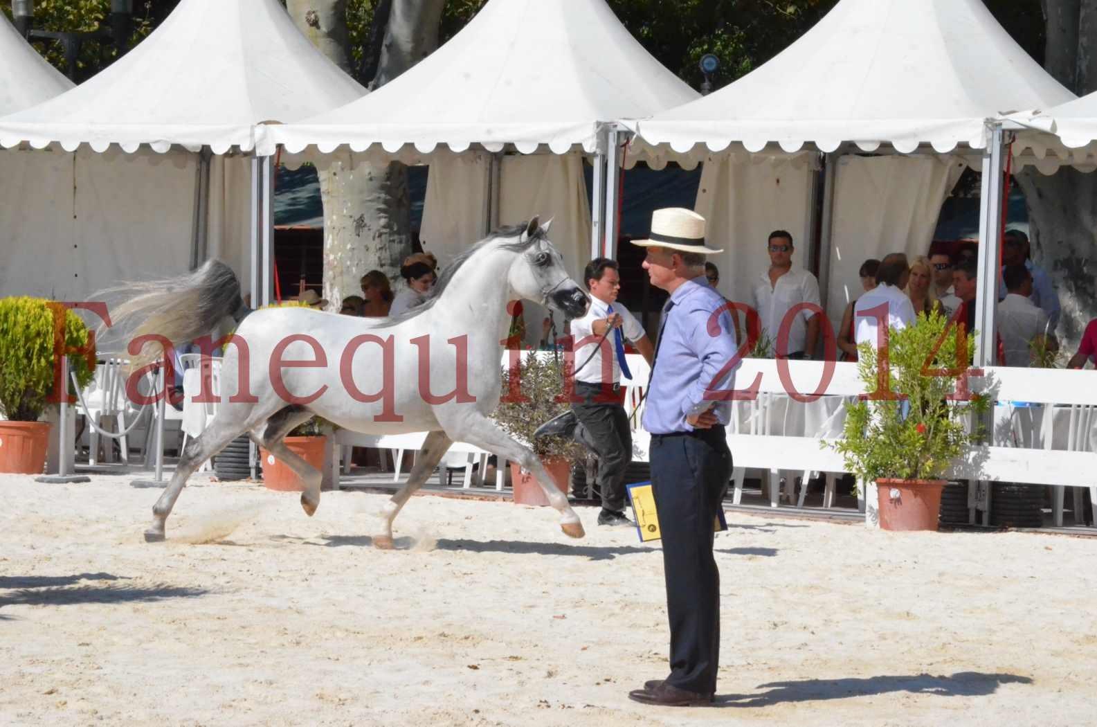 Concours National de Nîmes de chevaux ARABES 2014 - Sélection - SHAOLIN DE NEDJAIA - 02
