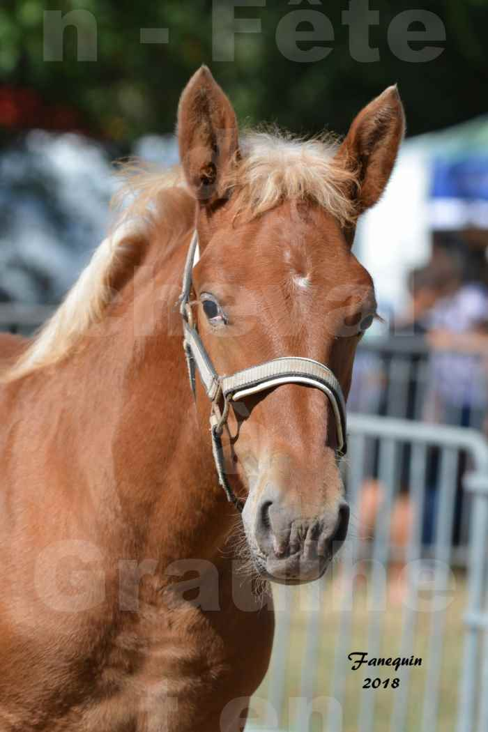 Fête du cheval à GRAULHET le 16 septembre 2018 - Concours Départemental de chevaux de traits - Portraits - 6