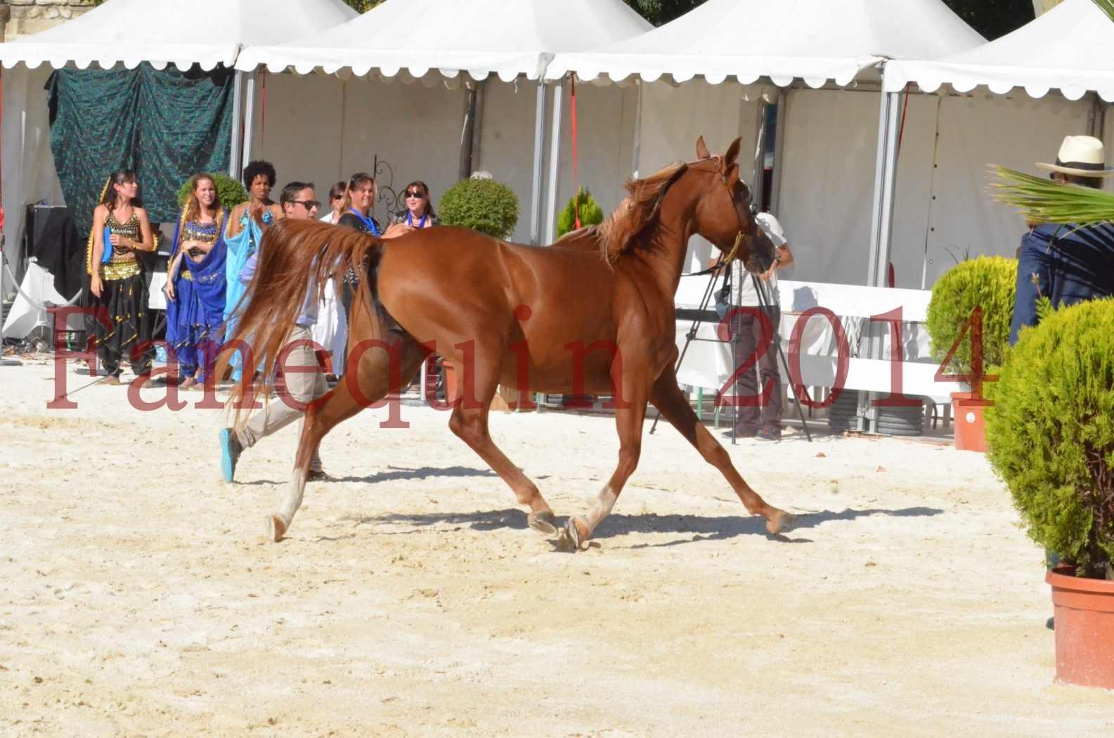 Concours National de Nîmes de chevaux ARABES 2014 - Championnat - MASSAI DE BARREL - 52