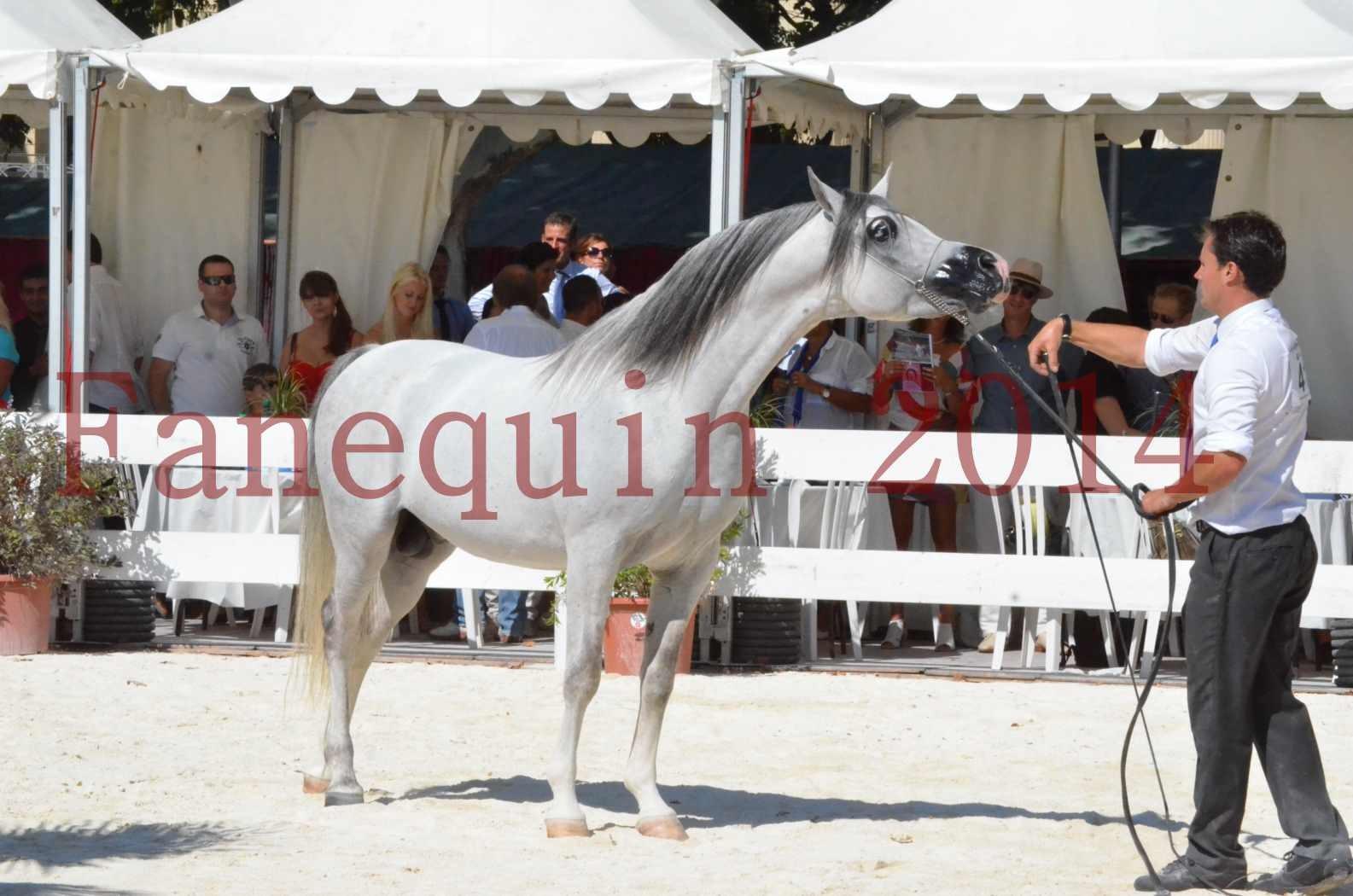 Concours National de Nîmes de chevaux ARABES 2014 - Sélection - SHAOLIN DE NEDJAIA - 85