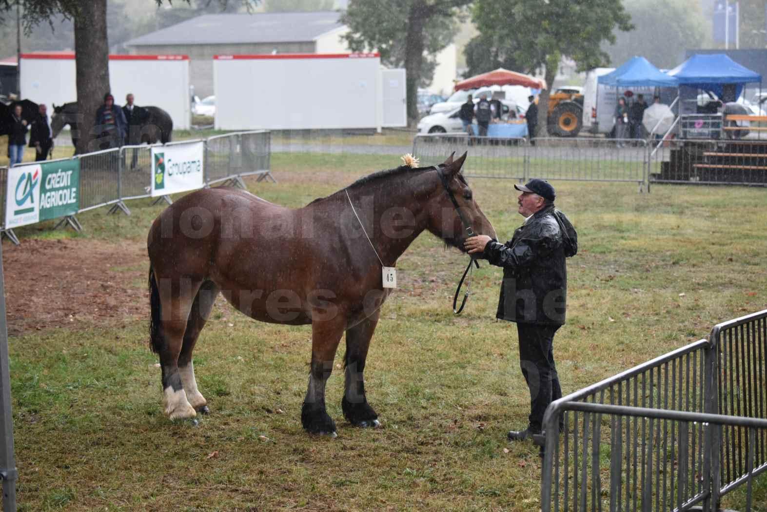 Concours Régional de chevaux de traits en 2017 - Trait BRETON  - EGLANTINE DE BENECHE - 01