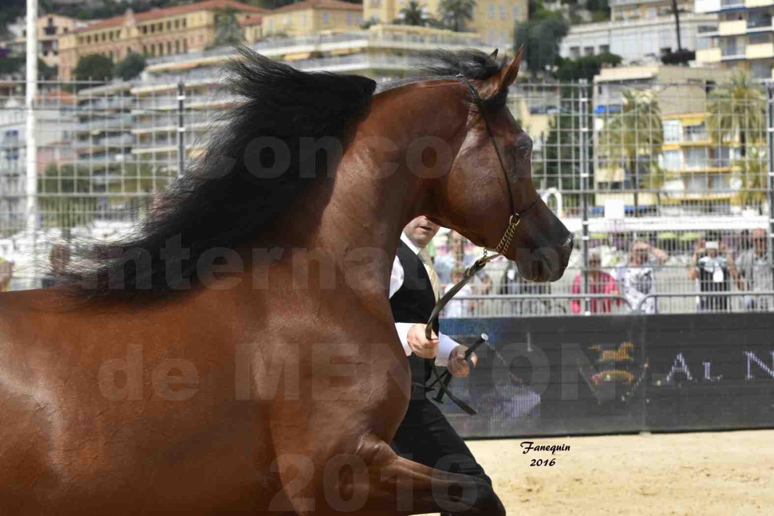 Championnat du pur-sang arabe de la Méditerranée et des pays arabes - MENTON 2016 - GALLARDO J - Notre Sélection - Portraits - 3