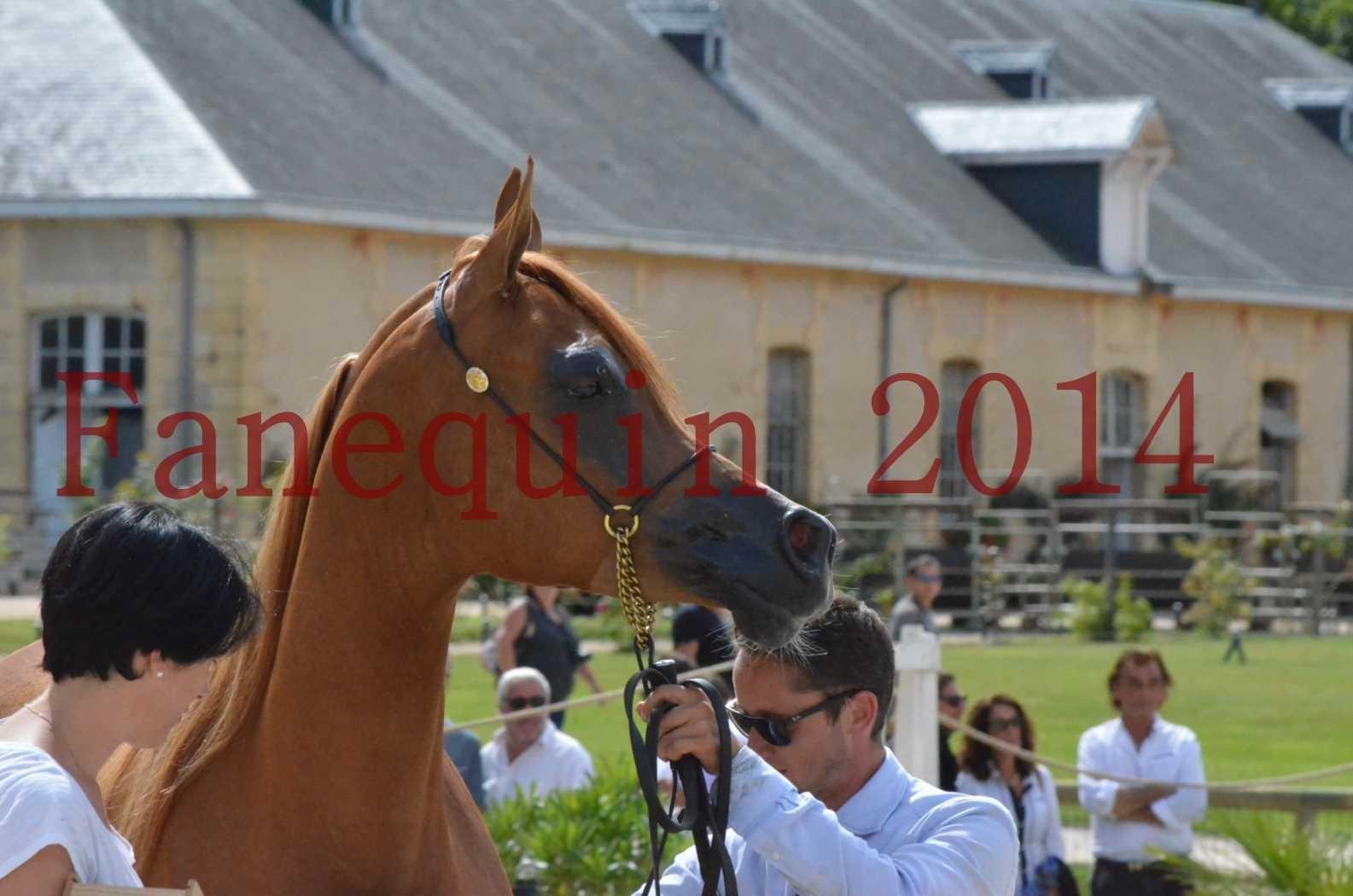 CHAMPIONNAT DE FRANCE 2014 A POMPADOUR - Championnat - LUTFINAH JA - 75