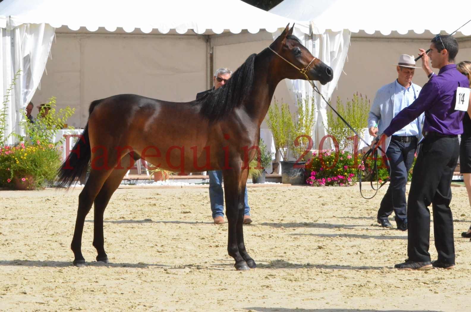 Championnat de FRANCE 2014 - Amateurs - SH FARAJAA - 32