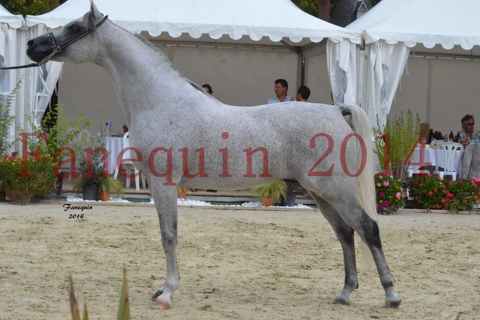 CHAMPIONNAT DE FRANCE  2014 A POMPADOUR - Notre Sélection - SHEYK DE GARGASSAN - 13