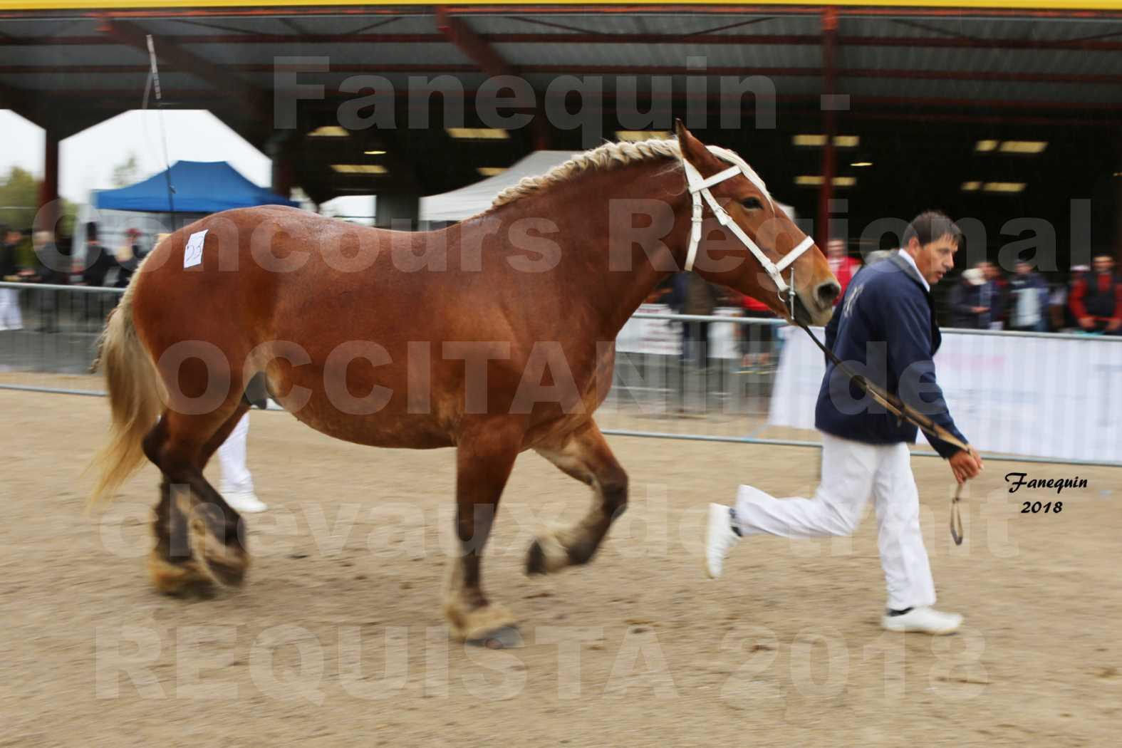 Concours Régional OCCITANIE de chevaux de traits à REQUISTA - DIANE DE GRILLOLES - 4