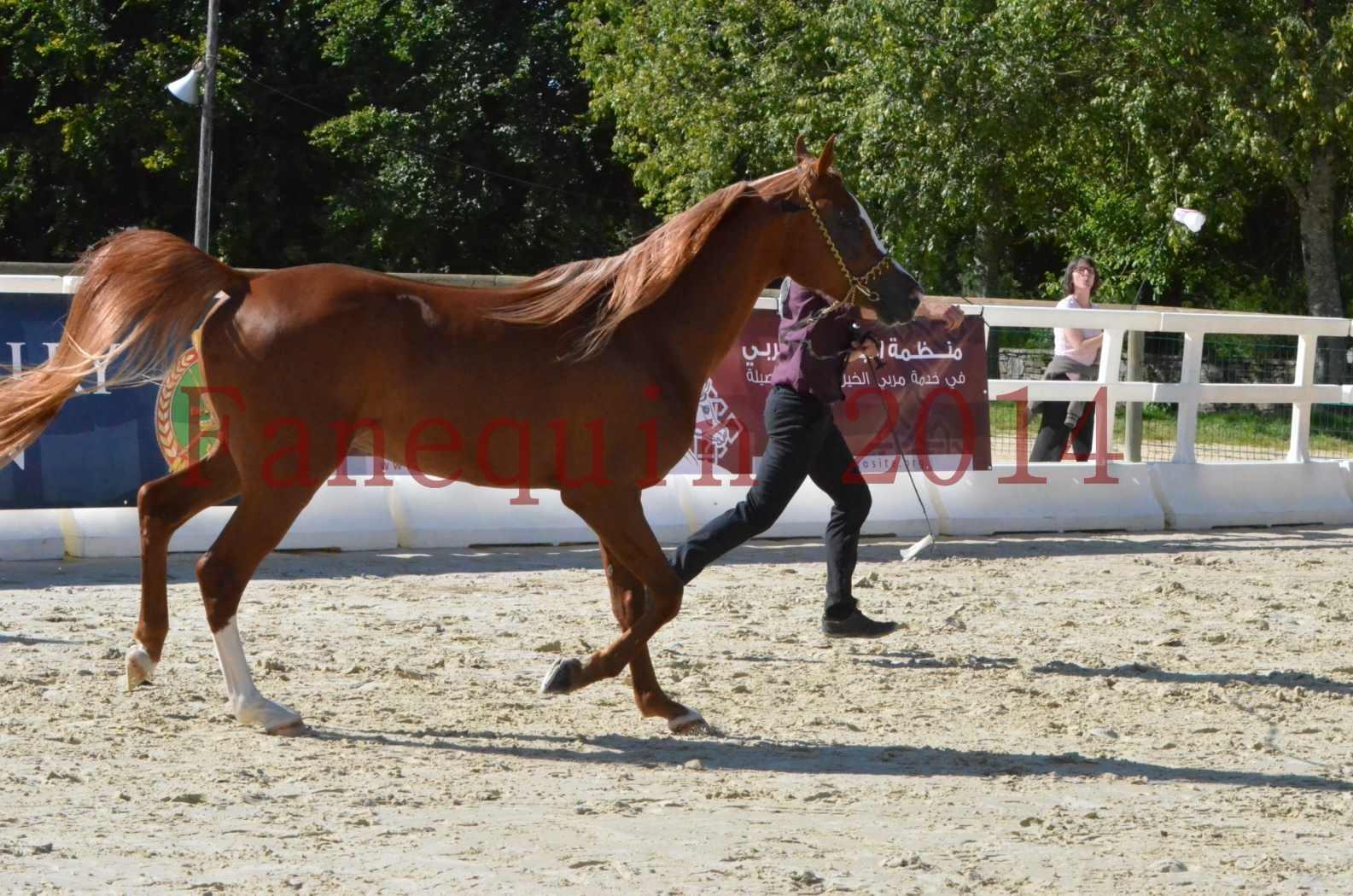 Championnat de FRANCE 2014 - Amateurs - SELECTO IBN SAMAWI - 036