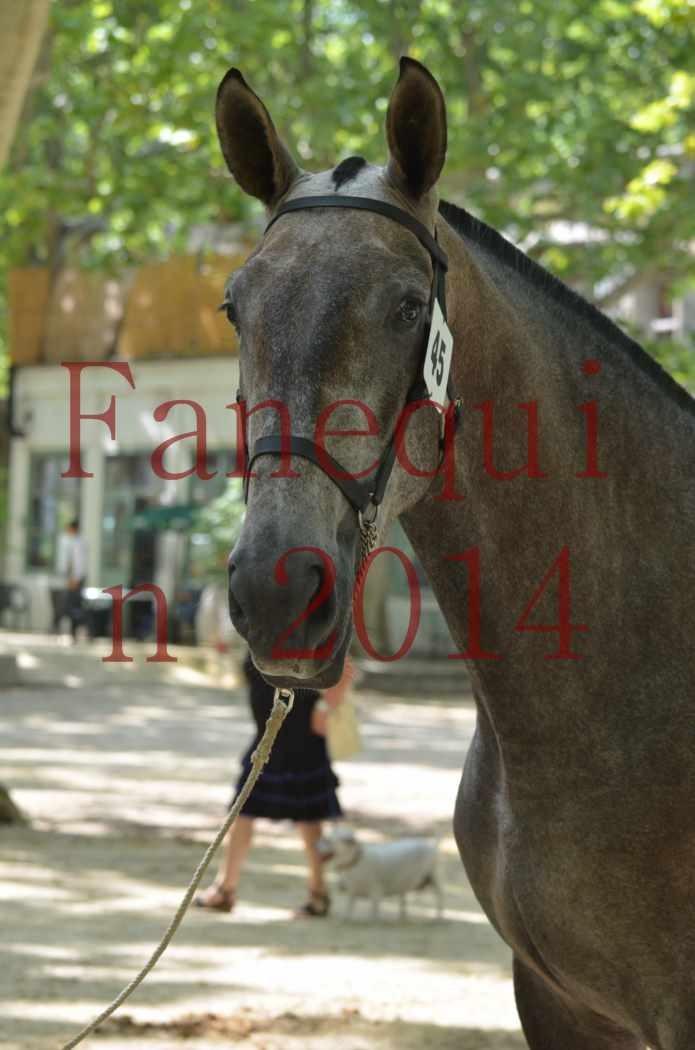 Portraits Chevaux Elevage RONCHAIL-01