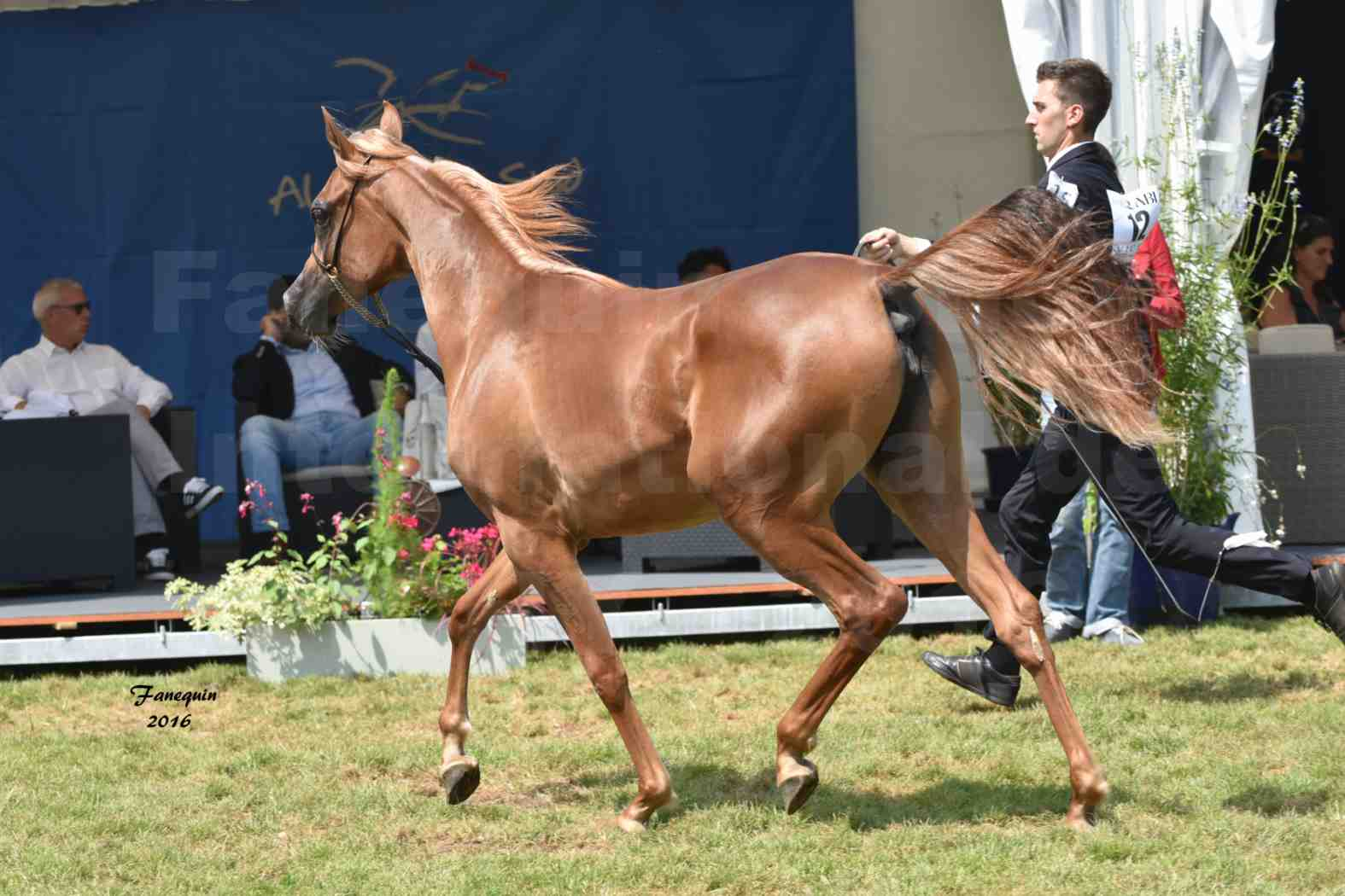 International Arabian Horse Show B de VICHY 2016 - JA FALAENE - Notre Sélection - 06