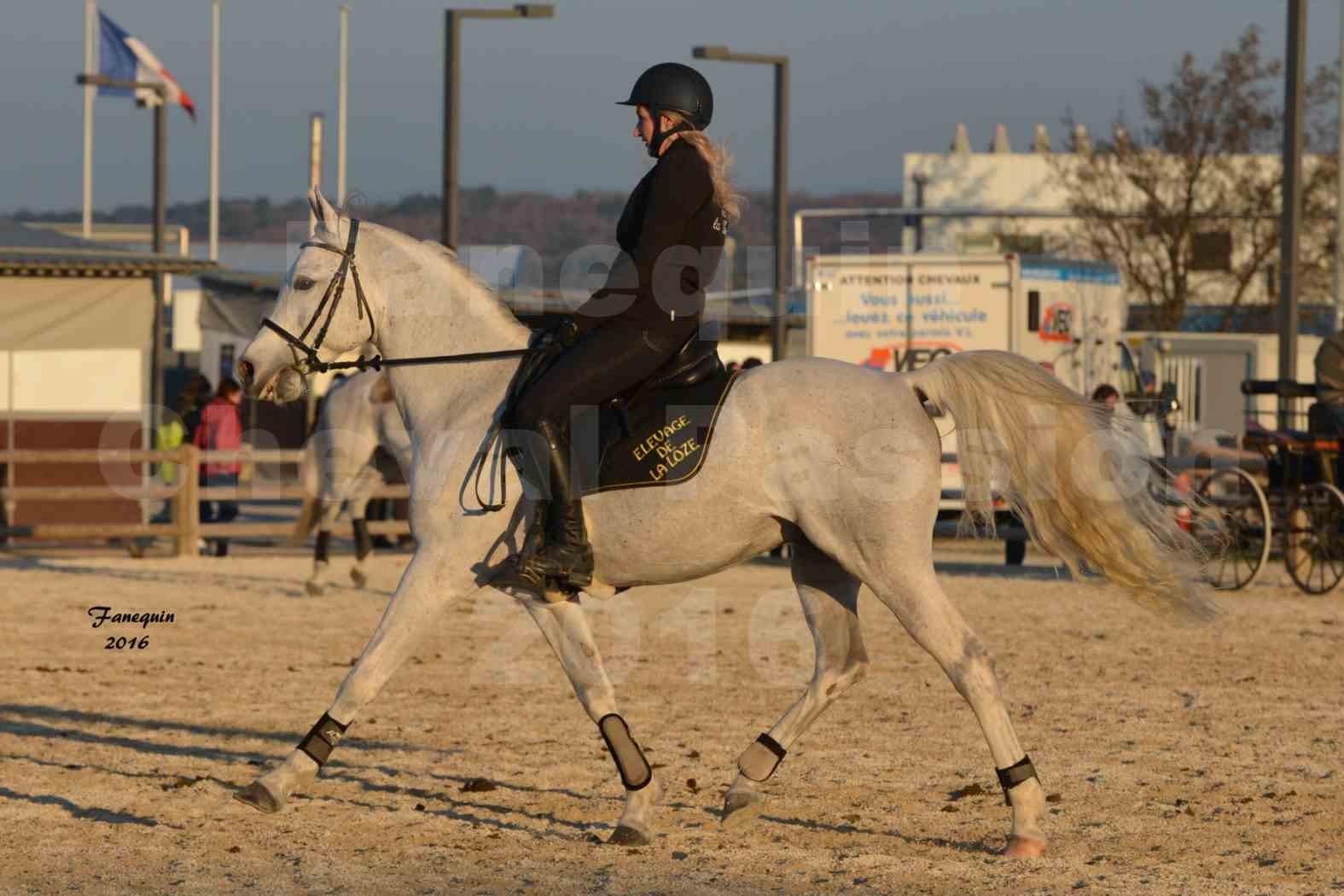 Cheval Passion 2016 - Présentation extérieure de chevaux Arabes montés - 19
