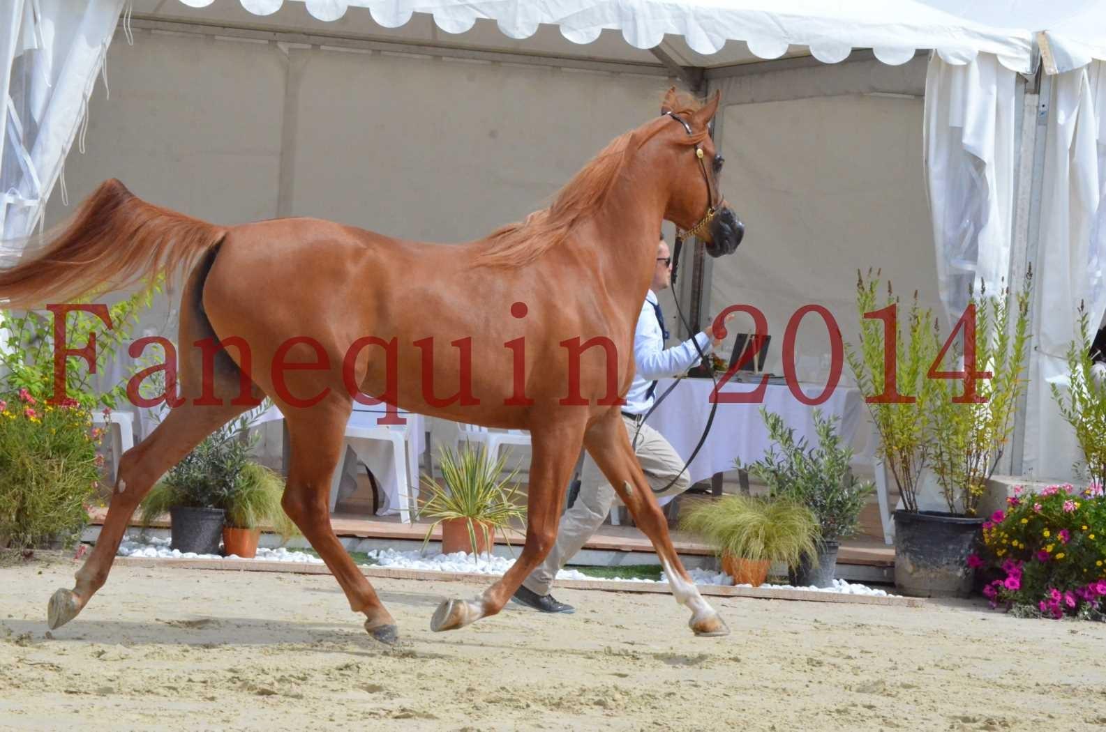 CHAMPIONNAT DE FRANCE 2014 A POMPADOUR - Championnat - LUTFINAH JA - 37