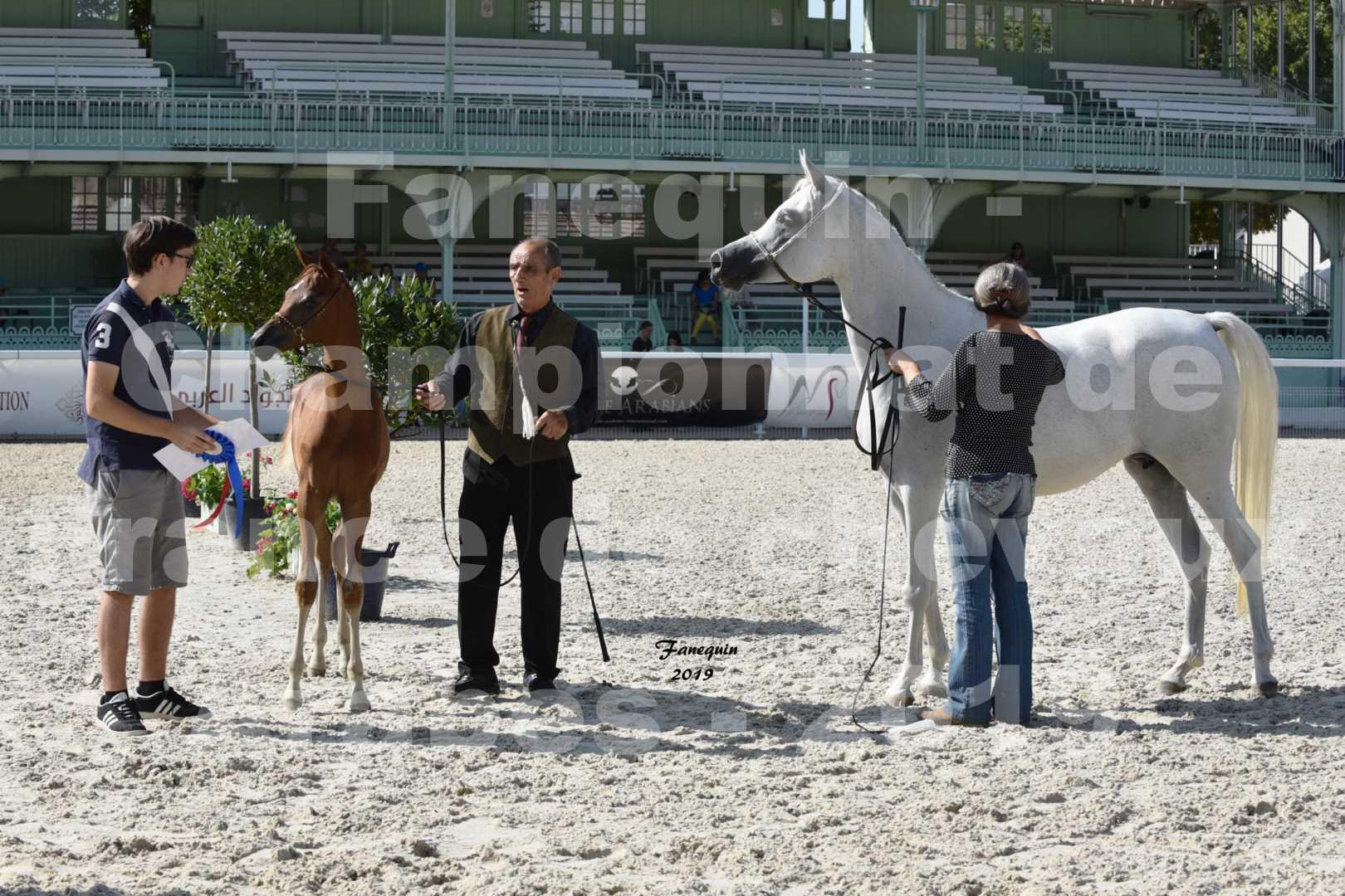 Championnat de France des chevaux Arabes en 2019 à VICHY - SH CYRENE - 6