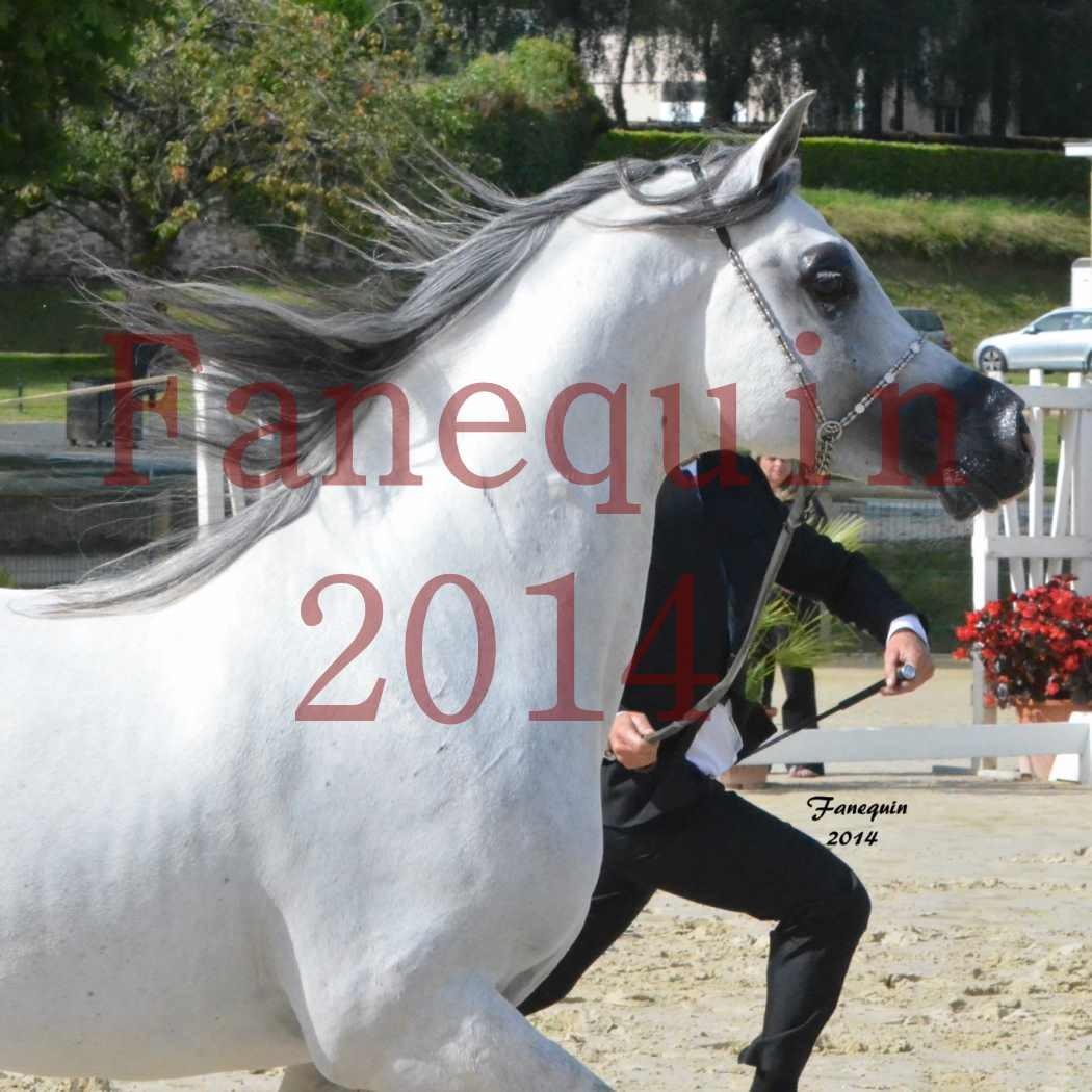 CHAMPIONNAT DE FRANCE  2014 A POMPADOUR - Notre Sélection - Portraits - SHAOLIN DE NEDJAIA - 05