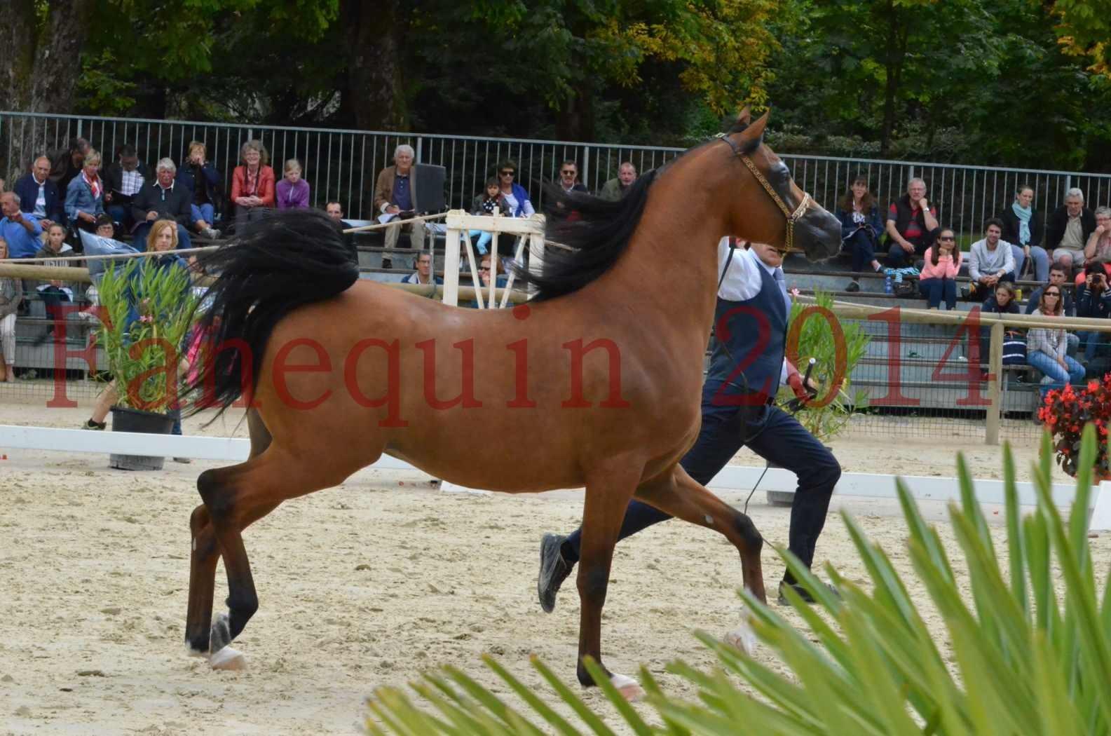 CHAMPIONNAT DE FRANCE 2014 A POMPADOUR - KOHINOUR DE CARTHEREY - 32