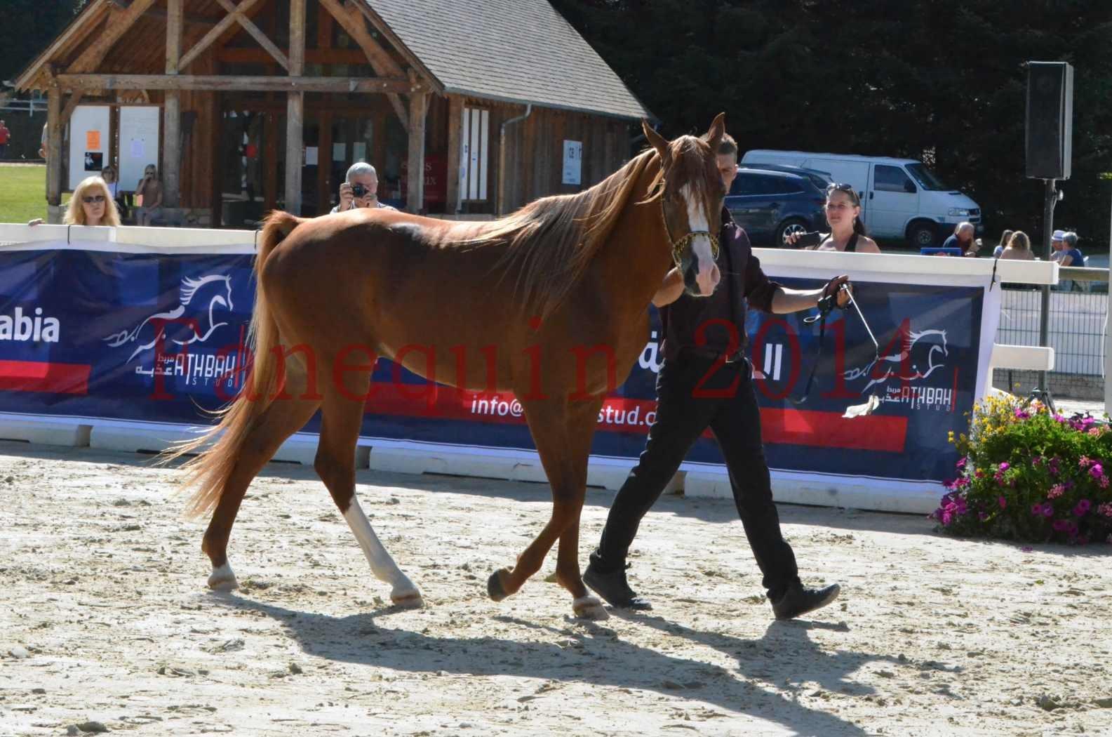 Championnat de FRANCE 2014 - Amateurs - SELECTO IBN SAMAWI - 022