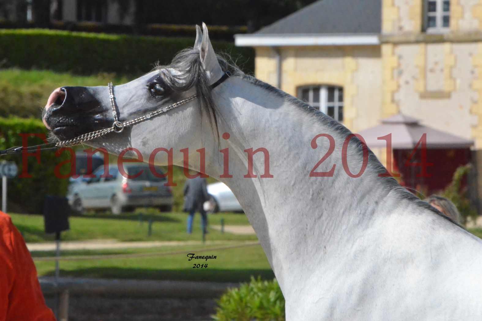 CHAMPIONNAT DE FRANCE  2014 A POMPADOUR - Notre Sélection - Portraits - SHAOLIN DE NEDJAIA - 11