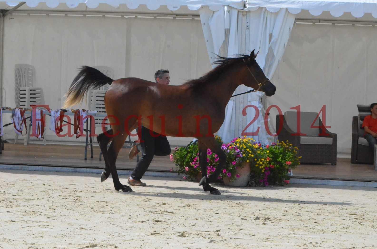 Championnat de FRANCE 2014 - Amateurs - KAL'ELLE D'ELHORIA - 51