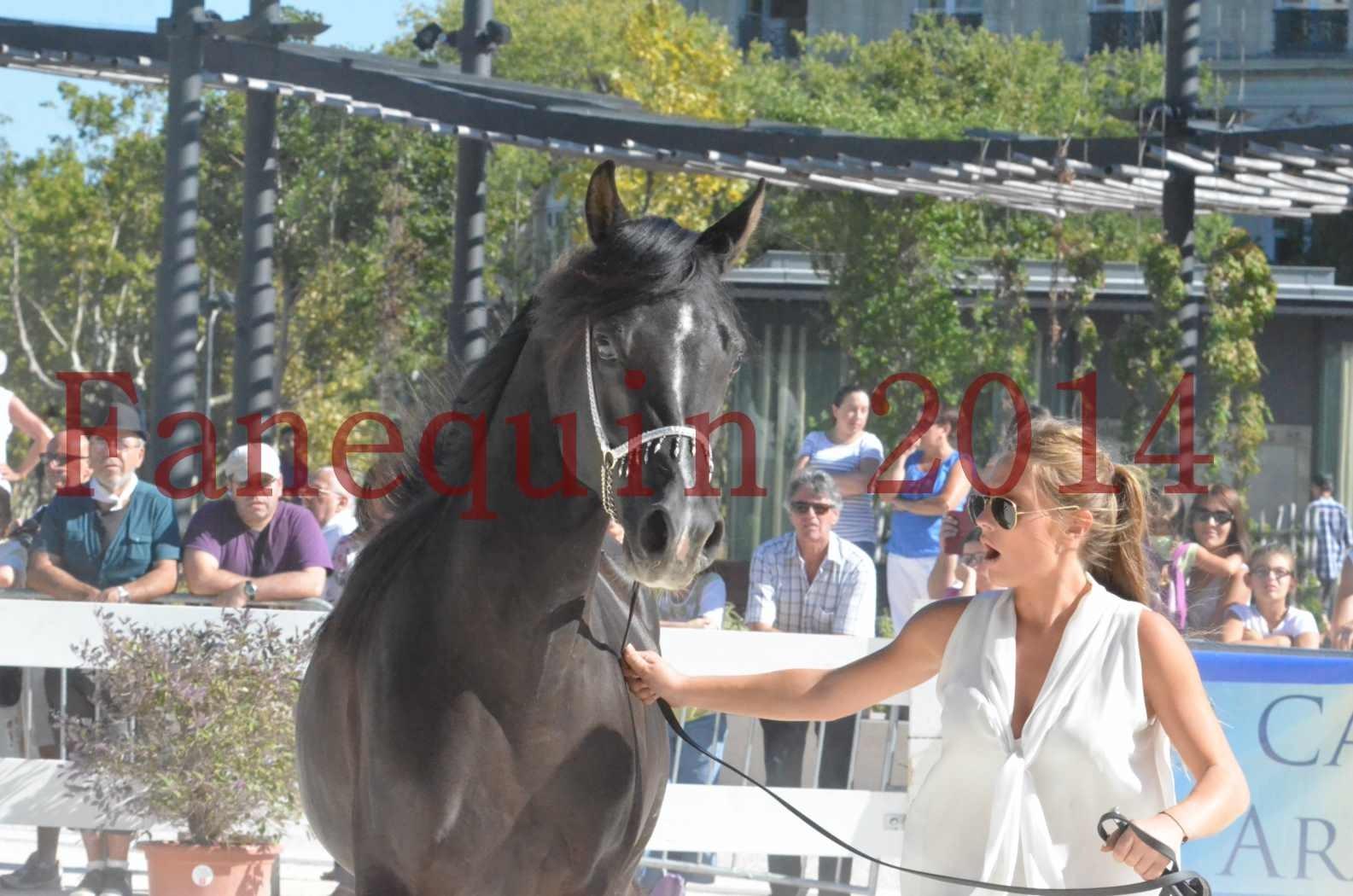 Concours National de Nîmes de chevaux ARABES 2014 - Sélection - Portraits - BALTYK DE CHAUMONT - 07