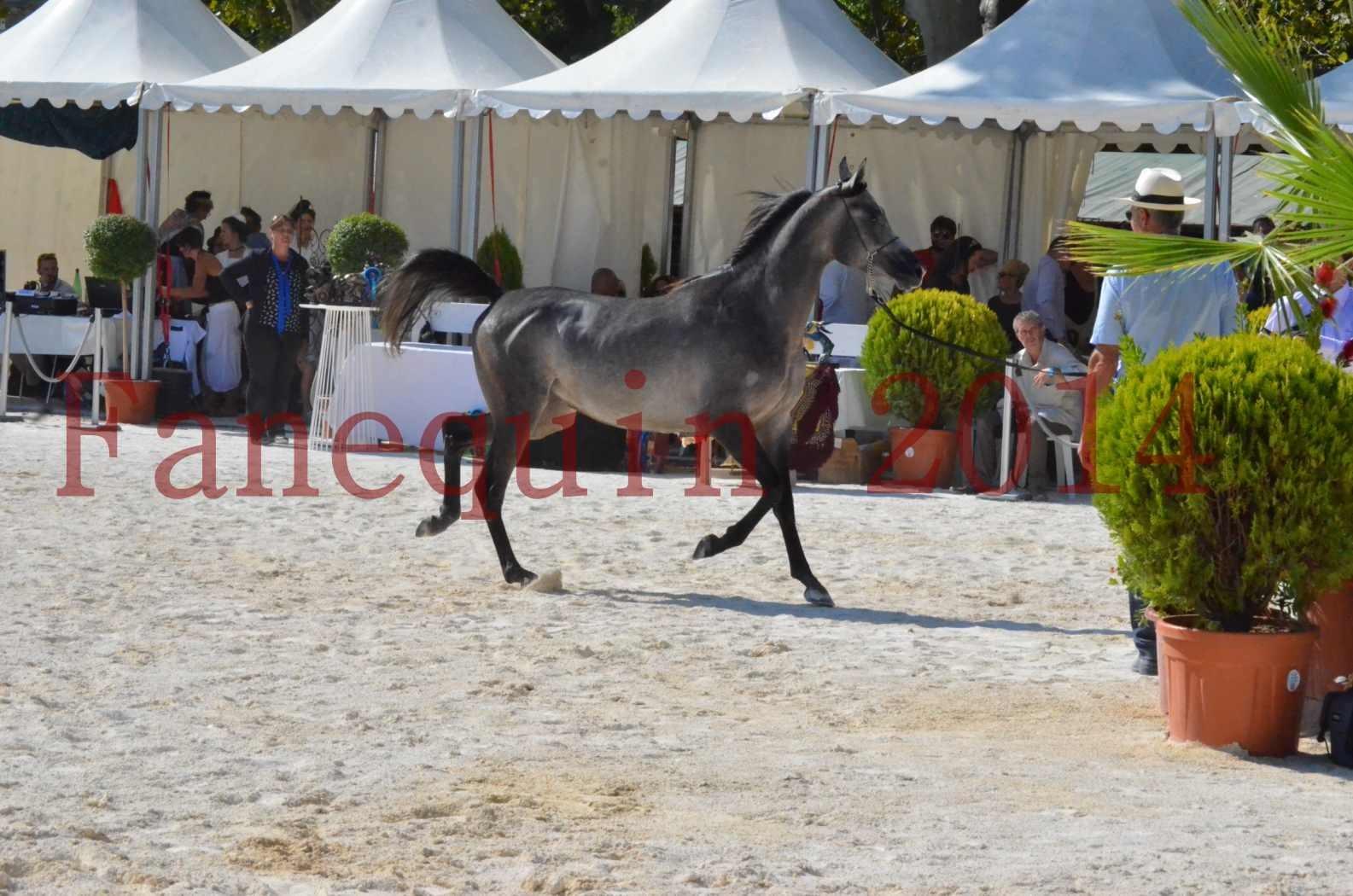 Concours National de Nîmes de chevaux ARABES 2014 - Championnat - JOSEPH'S BOUZIOLS - C 04