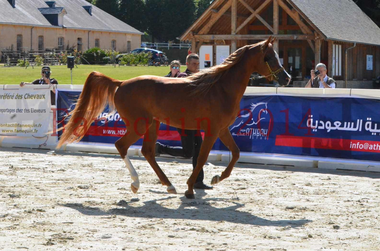 Championnat de FRANCE 2014 - Amateurs - SELECTO IBN SAMAWI - 011