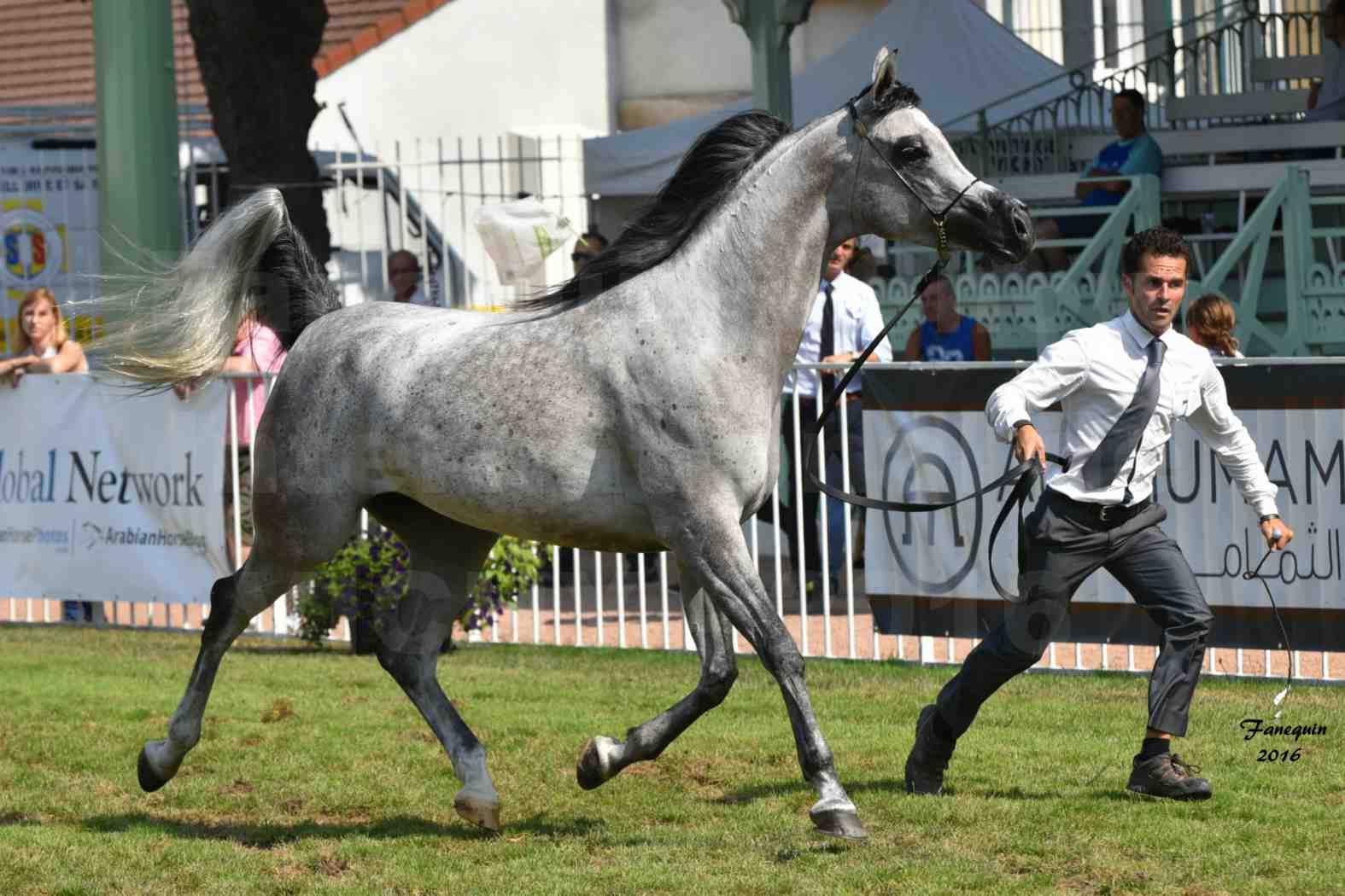 International Arabian Horse Show B de VICHY 2016 - ISABELLA - Notre Sélection - 02