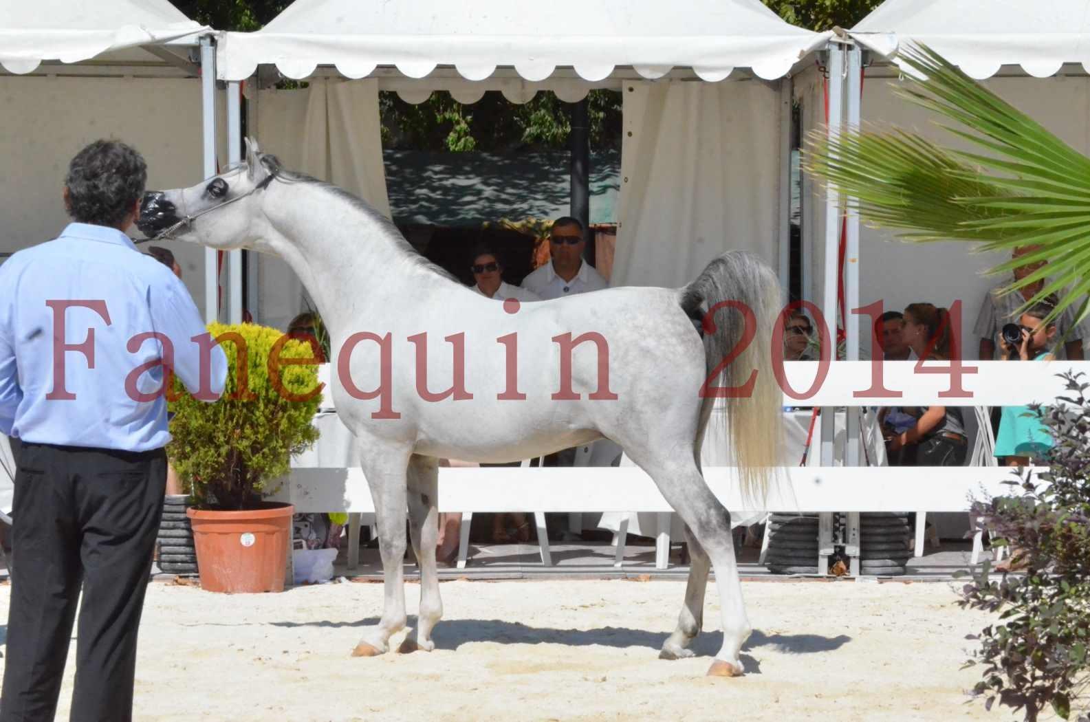 Concours National de Nîmes de chevaux ARABES 2014 - Sélection - SHAOLIN DE NEDJAIA - 71