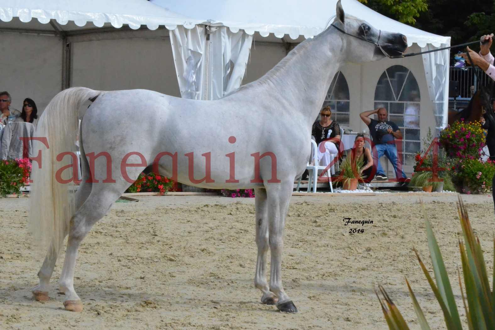 CHAMPIONNAT DE FRANCE 2014 A POMPADOUR - Notre Sélection - FA STARLIGHT - 6