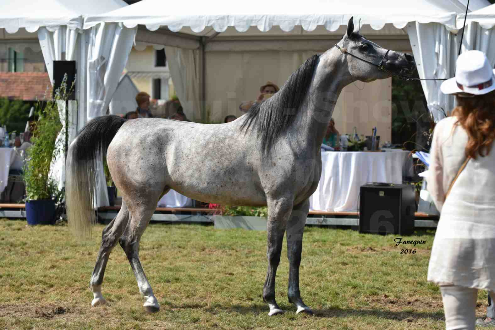 International Arabian Horse Show B de VICHY 2016 - ISABELLA - Notre Sélection - 10