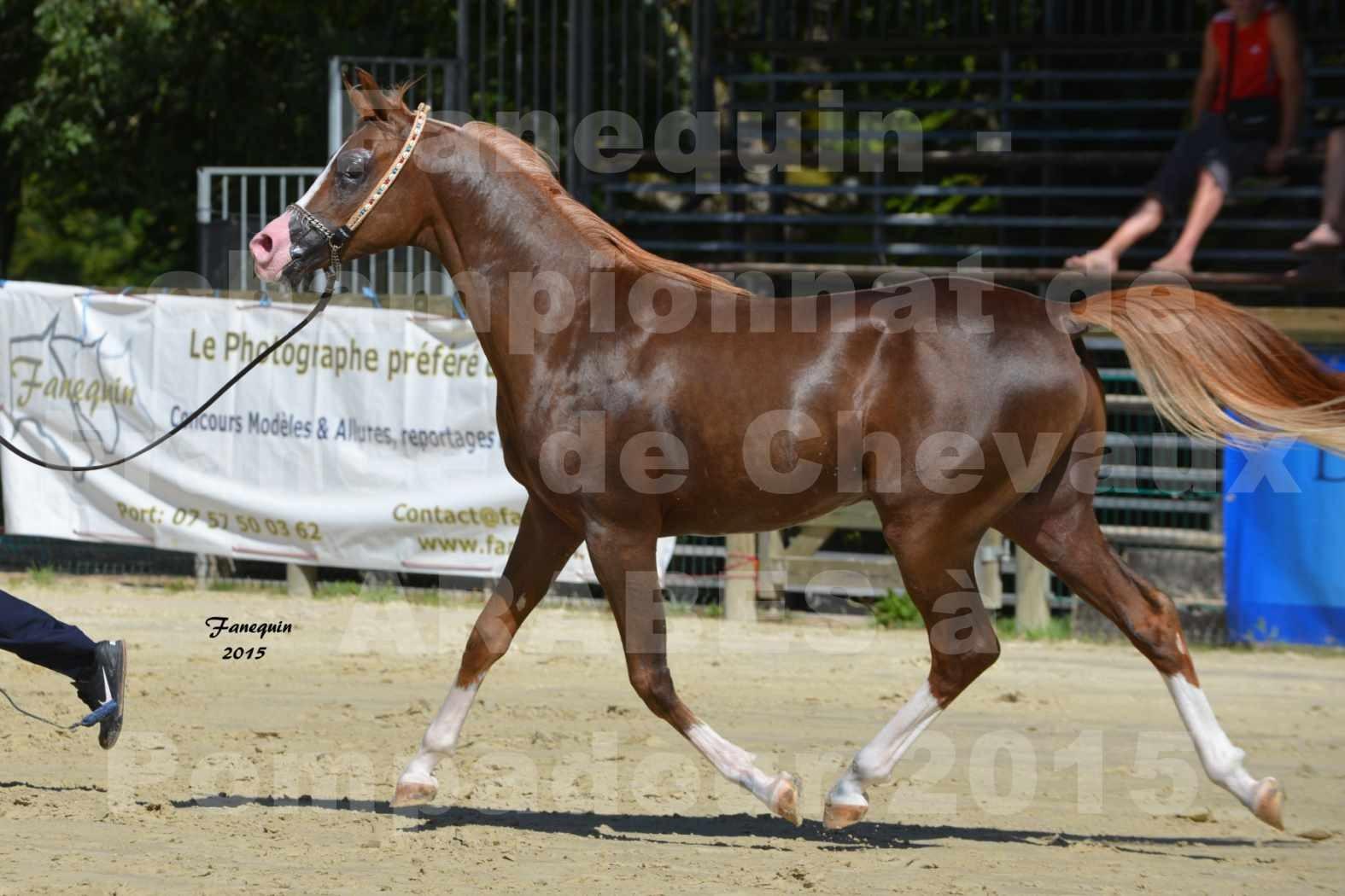 Championnat de FRANCE du cheval ARABE à POMPADOUR les 21, 22 & 23 Août 2015 - Classe professionnel
