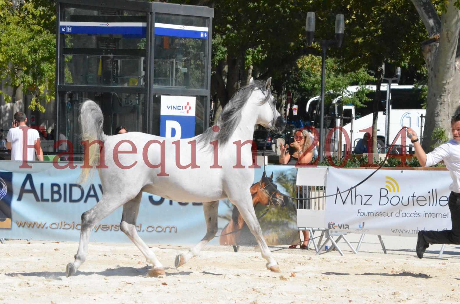 Concours National de Nîmes de chevaux ARABES 2014 - Sélection - SHAOLIN DE NEDJAIA - 27