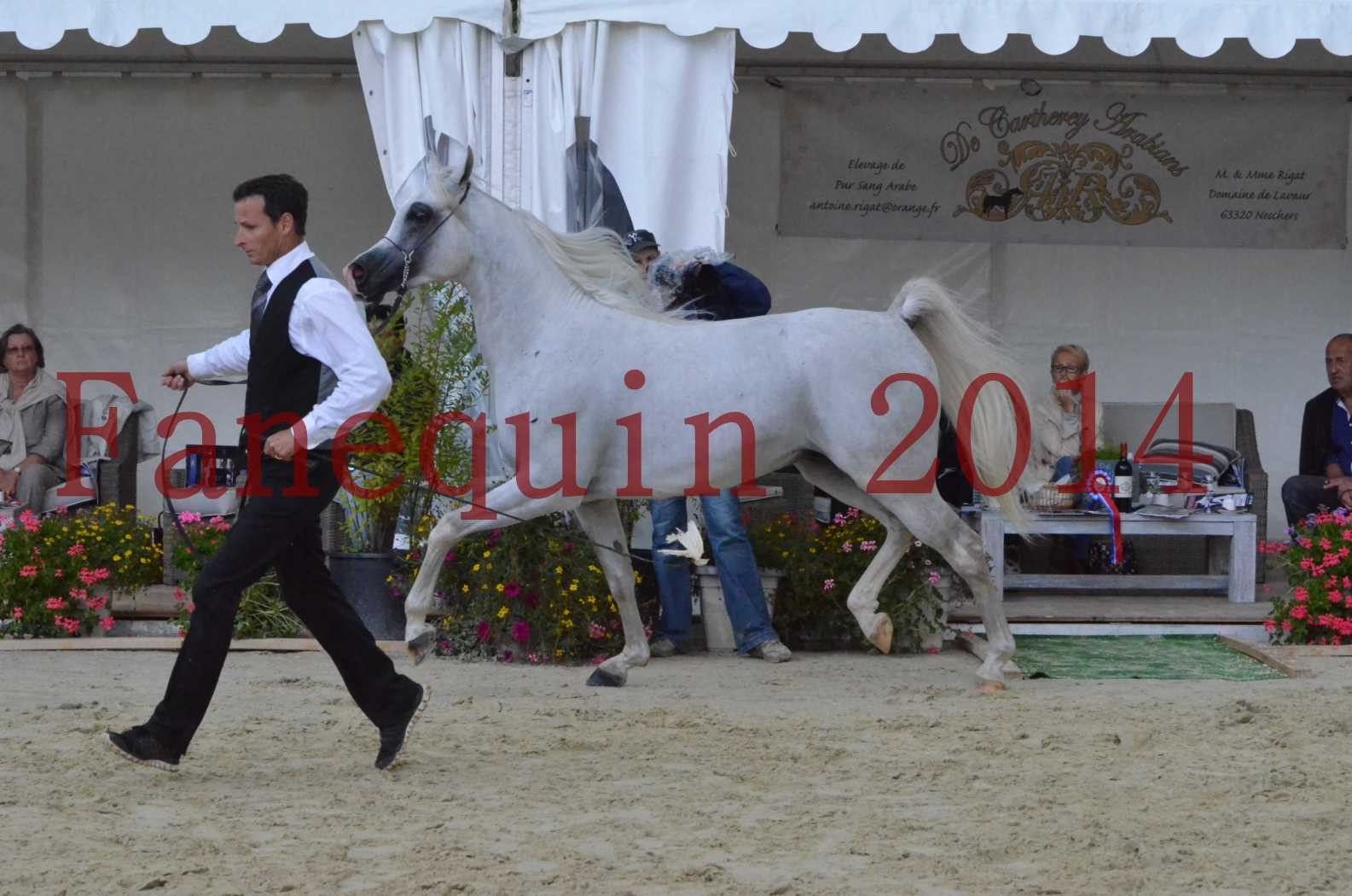 CHAMPIONNAT DE FRANCE 2014 A POMPADOUR - Sélection - FA STARLIGHT - 17