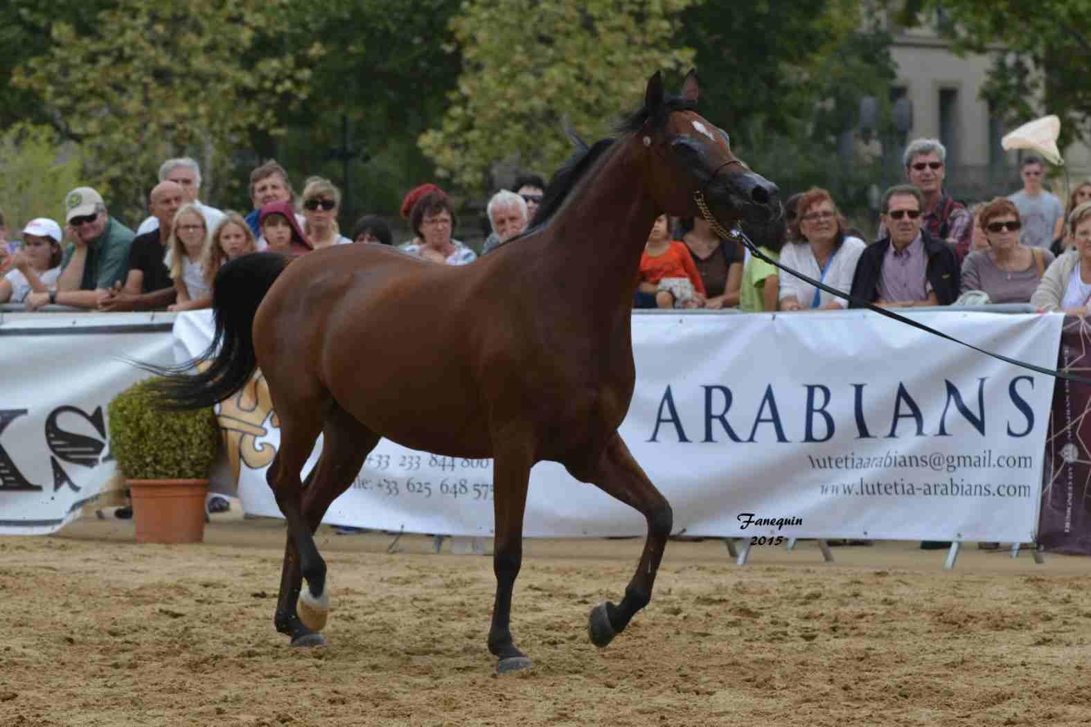 KARAWAN ALBIDAYER en 2015 - Concours national Nîmes prestige - notre sélection - 14