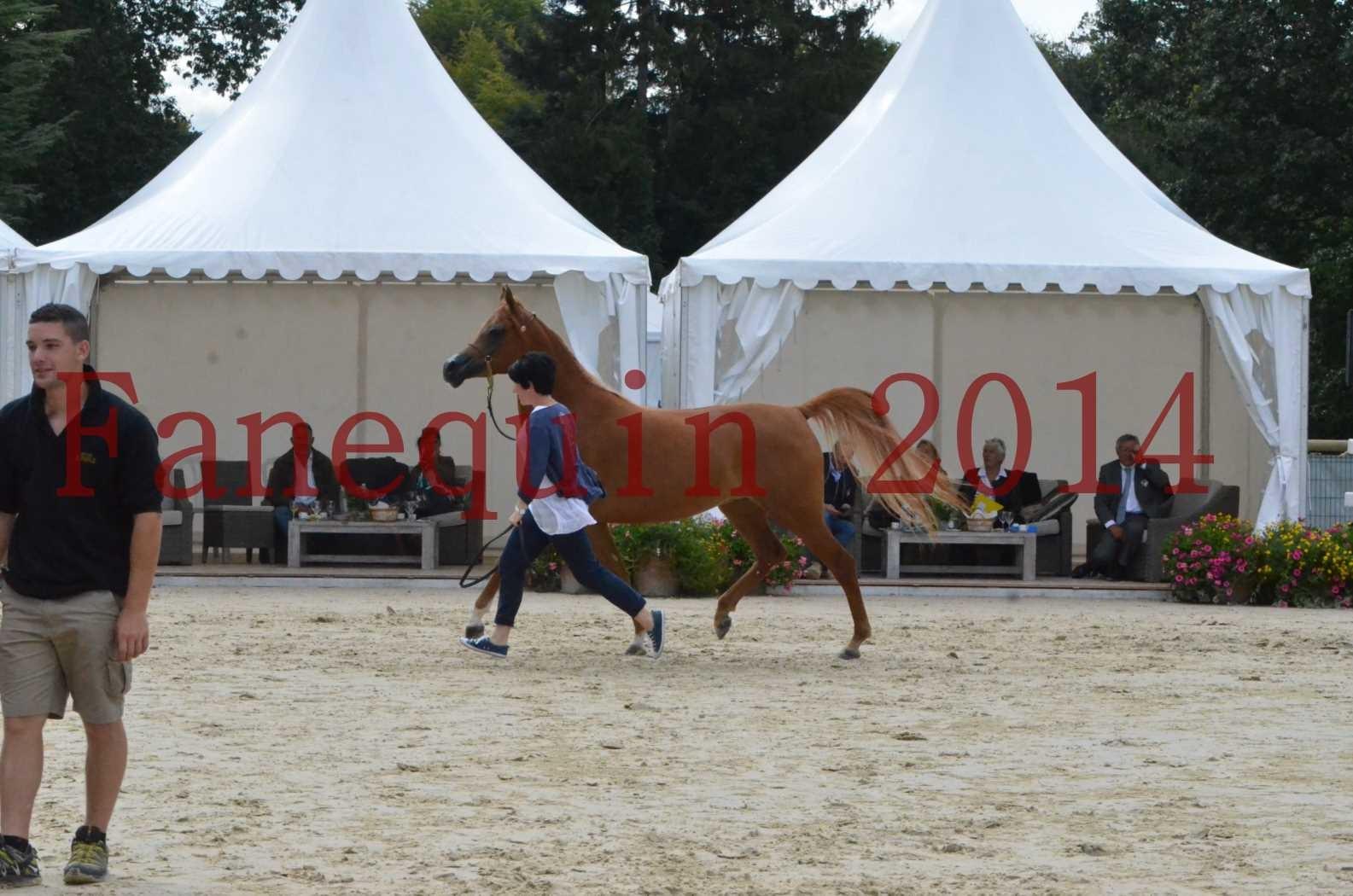 CHAMPIONNAT DE FRANCE 2014 A POMPADOUR - Sélection - LUTFINAH JA - 51